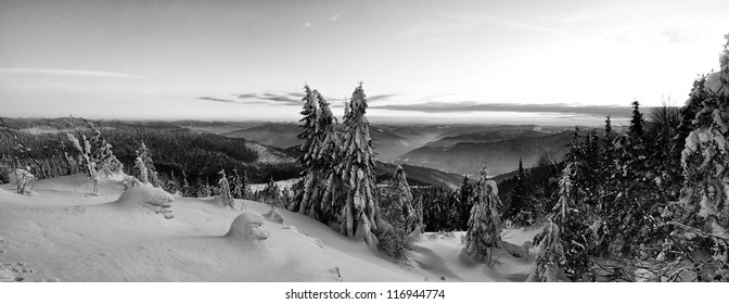 Beautiful winter landscape black and white panorama in the Carpathian mountains, Ukraine