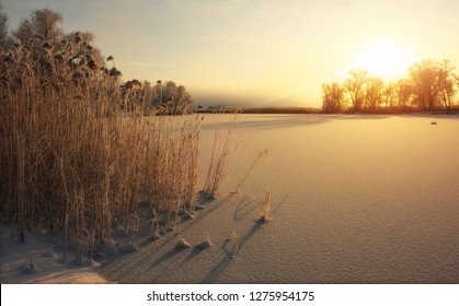 Beautiful winter landscape. The branches of the trees are covered with hoarfrost. Foggy morning sunrise. Colorful evening, bright sunshine over a river or lake.