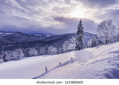 Beautiful winter landscape with Carpathian mountains covered by mixed forest under untouched fresh heavy snow. Sun is shining through gap in clouds. Seasonal greeting card background.