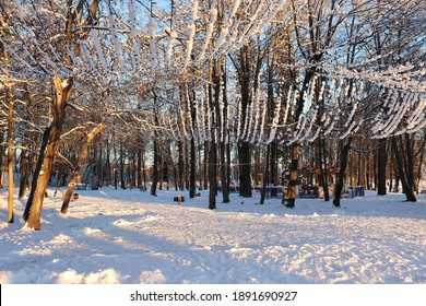 Beautiful winter landscape in the city park. On the tall trees hang garlands covered with snow. Snow-covered land and blue sky. Sunlight. A walk through the forest. Fresh air.