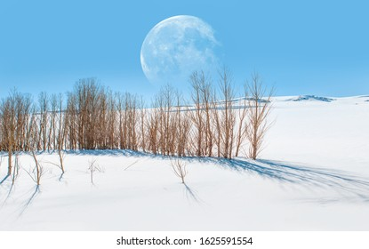 "Beautiful winter landscape with dead trees and shadows on the snow and full moon ""Elements of this image furnished by NASA """