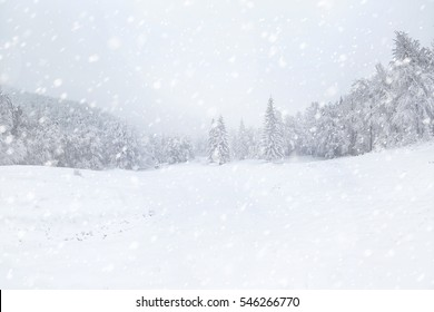 Beautiful winter landscape during snow storm