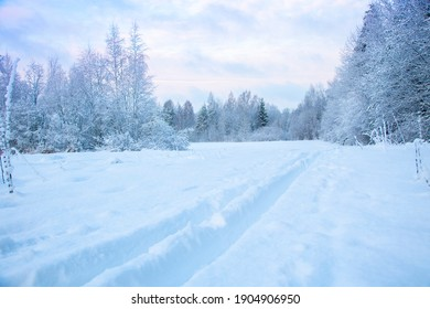 Beautiful winter landscape with field of white snow and forest on horizon on sunny frosty day
