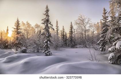 beautiful winter landscape. winter forest