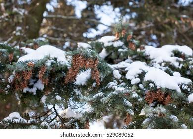 Beautiful winter landscape. Winter forest. winter landscape, background, space. landscape. winter landscape