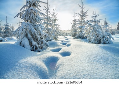 beautiful winter landscape with the forest  and blue sky