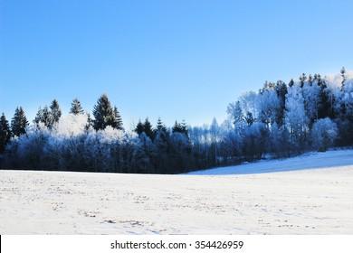 Beautiful winter landscape. Winter forest. Snowy landscape