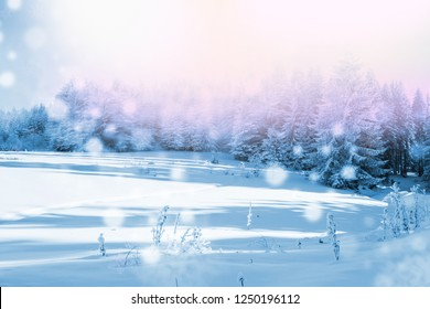 Beautiful winter landscape with forest, trees and sunrise. Winterly morning of a new day. Purple winter landscape with sunset.