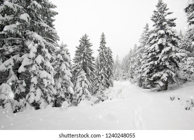 Beautiful winter landscape. The forrest ist covered with snow.
