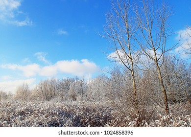 beautiful winter landscape with fresh snow and trees