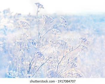 beautiful winter landscape. frozen grass, gentle natural background. frosty weather. cold winter season. new year, Christmas holiday