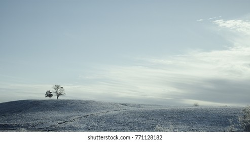 A beautiful winter landscape glimmers in the morning light.  A lightly fallen snow settles on the field.