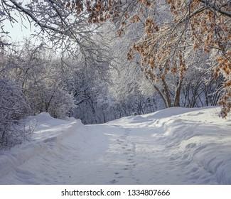 Beautiful Winter Landscape in Minnesota