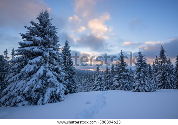 Beautiful winter landscape in mountains -  colorful clouds float over  snow covered pine trees and hills, during sunset.