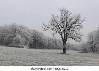 Beautiful winter Landscape next to Schwandorf in Bavaria