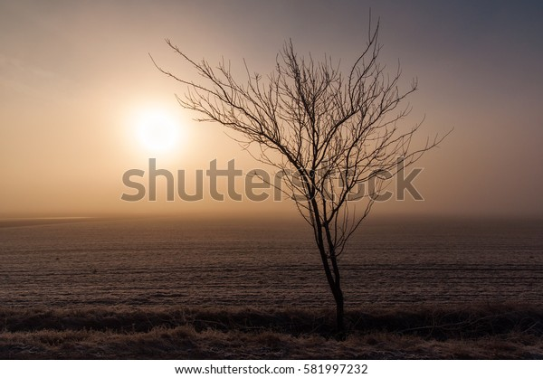 Beautiful winter landscape on countryside with interesting structure of ground and lonely tree on the horizon.