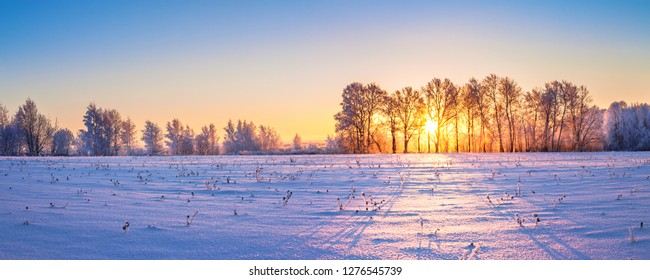 beautiful winter landscape panorama with sunrise. sun shines through trees in forest panoramic view