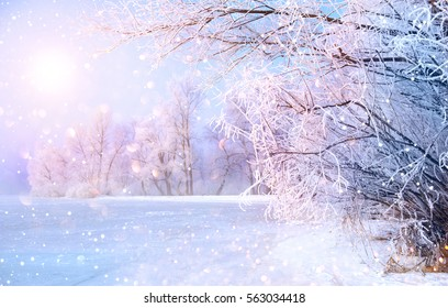 Beautiful Winter landscape scene background wit snow covered trees and ice river. Beauty sunny winter backdrop. Wonderland. Frosty trees in snowy forest. Tranquil winter nature in sunlight