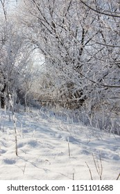 Beautiful winter landscape scene with scene with snow covered trees.