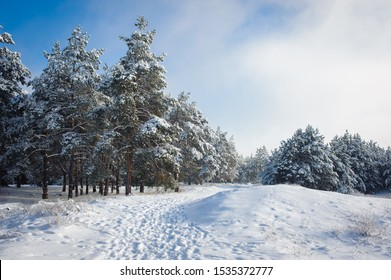 Beautiful winter landscape. Snow forest.