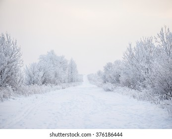 Beautiful winter landscape with the snow. A path between snow trees