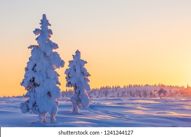 Beautiful winter landscape with snow-covered trees in Lapland, Finland