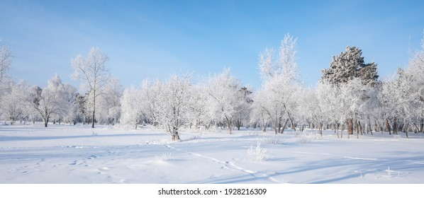 Beautiful winter landscape with snow-covered trees. Blue sky and textured snow. Winter's tale.