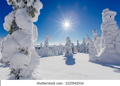 Beautiful winter landscape with snowy trees in Lapland, Finland. Frozen forest in winter. Trees covered by ice and snow in Scandinavia
