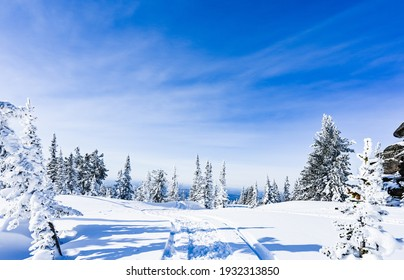 beautiful winter landscape spruce snow covered sunny weather