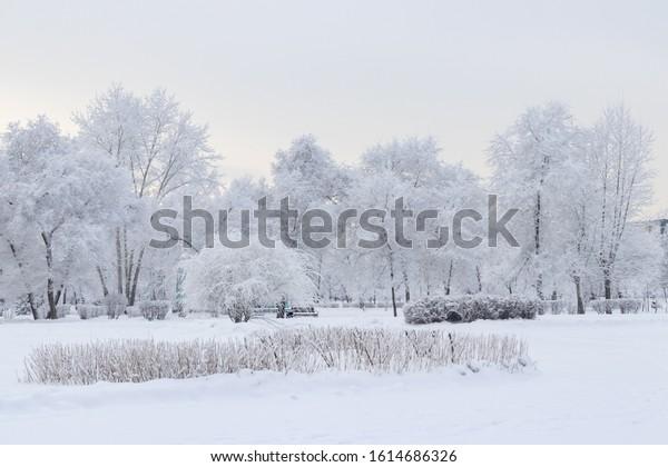 beautiful-winter-landscape-trees-bushes-