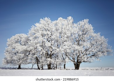 Beautiful winter landscape with trees in hoarfrost sunny day. Beautiful Christmas card.