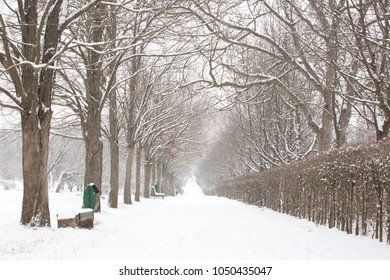 Beautiful winter landscape, trees with snow in a park, it's snowing - Shutterstock ID 1050435047