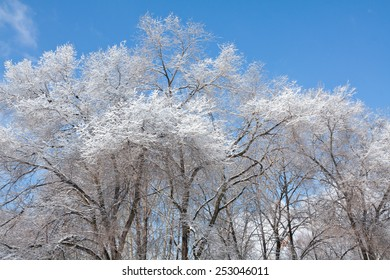 Beautiful winter landscape with white trees covered with frost