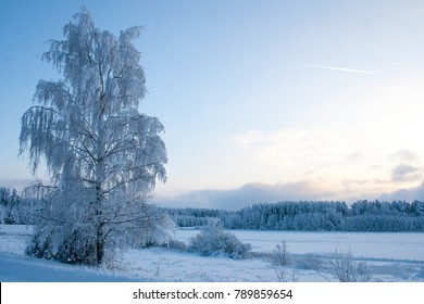 beautiful winter landscapes. snowy forest and blue sky