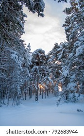 beautiful winter landscapes. snowy forest and sky