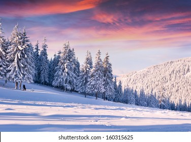 Beautiful winter morning with snow covered trees.