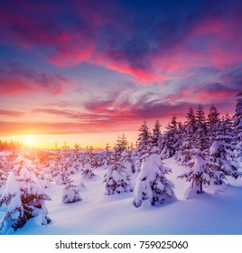 Beautiful winter nature landscape, amazing mountain view of sunset. Scenic image of woodland. Frosty weather. Location Carpathian, Ukraine. Superb winter wallpapers. Explore the beauty of earth.