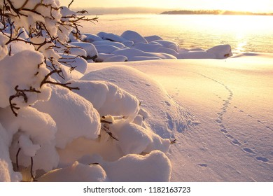 Beautiful winter sea landscape at sunset with fog and gold snow