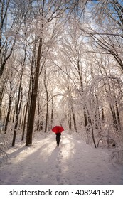 A beautiful winter snow scene at sunrise with a woman walking with a red umbrella as the snow clings to the trees and the sun shines through them.