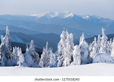 Beautiful winter snow scenes. View of the top of the mountains. Landscape with fir forest after snowfall