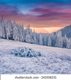 Beautiful winter sunrise in the mountain forest