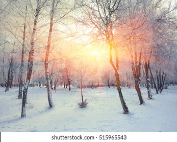 Beautiful winter sunset with trees in the snow. twilight