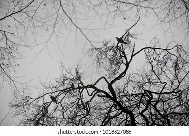 beautiful winter tree with  birds, background