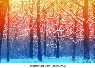 Beautiful winter trees on a multicolored background