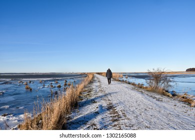 Beautiful winter view with a person walking on a snowy footpath through the reeds at the swedish island Oland