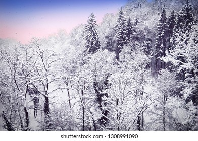 Beautiful winter view, snowy weather, naked trees covered with snow at sunset time near Innsbruck, Tyrol (Tirol), western Austria, Europe
