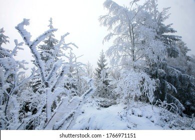 Beautiful winter in a wild area in the Table Mountains in Poland. Snow covered trees at the peak of Skalniak and eroded sandstone rock formations.