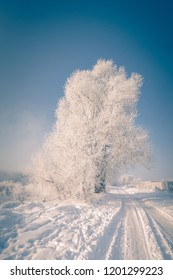 Beautiful winter wonderland landscape with foggy river and trees and plants, covered with hoar frost.