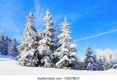 Imágenes Fotos De Stock Y Vectores Sobre Winter Trees Blue
