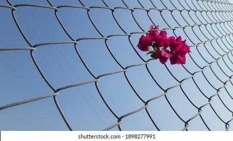 Beautiful wire mesh pattern in blue sky background